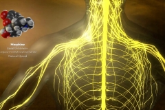 3-D Medical Model of Nervous System featured in Opioids Educational Video