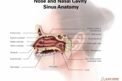 Nose and Nasal Cavity Sinus Anatomy