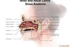 Nose and Nasal Cavity Sinus Anatomy